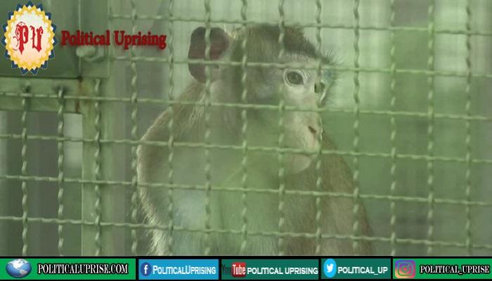Thailand starts Covid-19 vaccine trials on monkeys