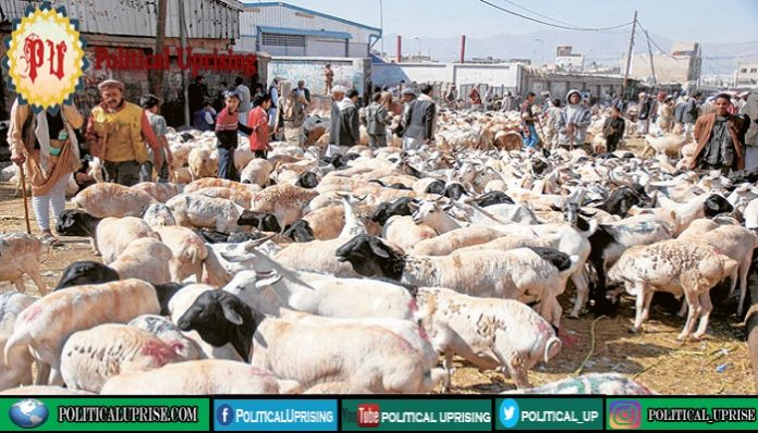 Saudi Arabia highlights health rules for sacrificial animals